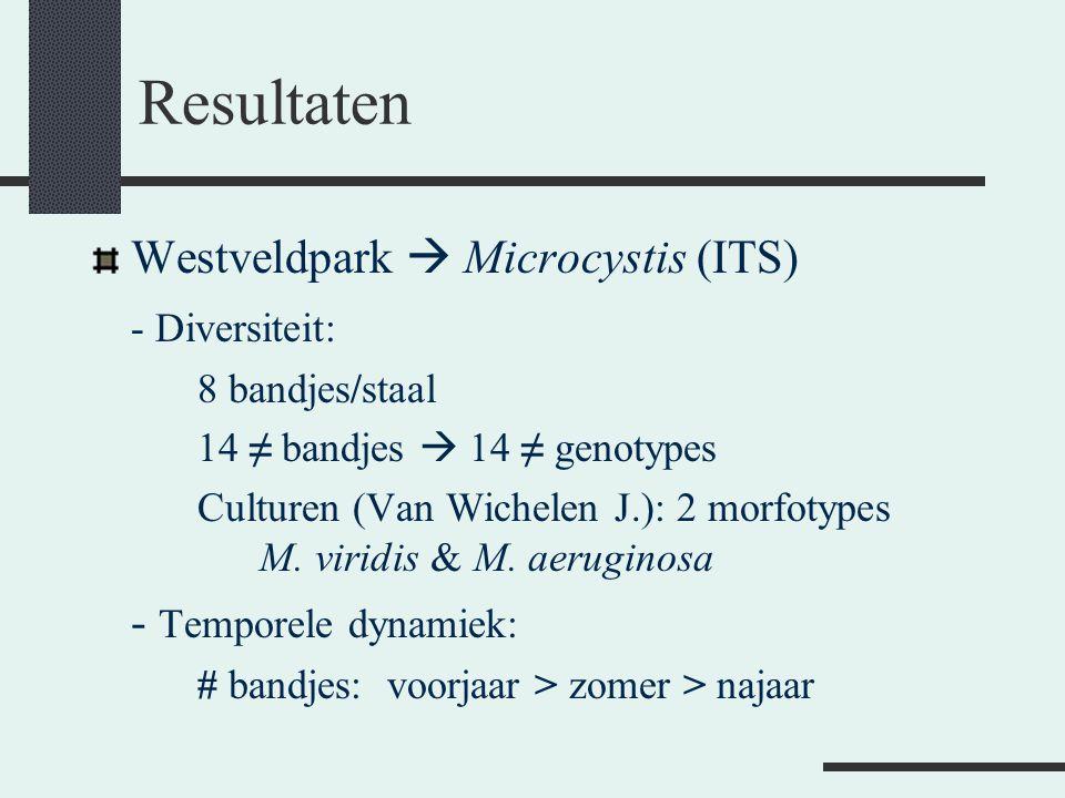 Resultaten Westveldpark  Microcystis (ITS) - Diversiteit: