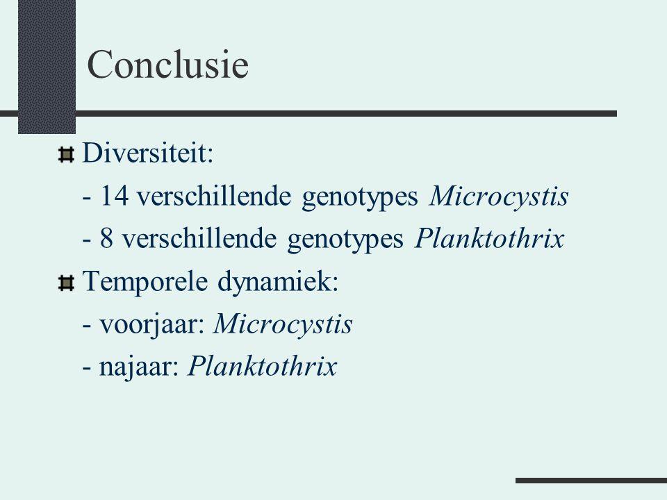 Conclusie Diversiteit: - 14 verschillende genotypes Microcystis
