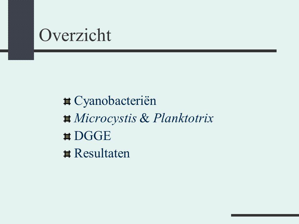 Overzicht Cyanobacteriën Microcystis & Planktotrix DGGE Resultaten