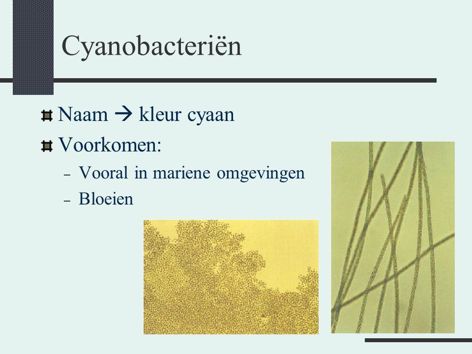 Cyanobacteriën Naam  kleur cyaan Voorkomen: