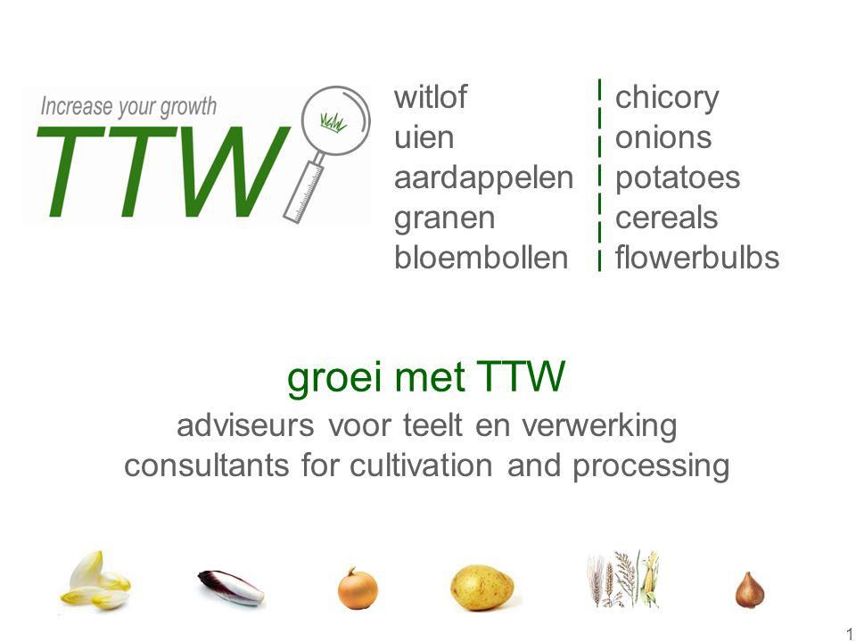 groei met TTW witlof uien aardappelen granen bloembollen chicory