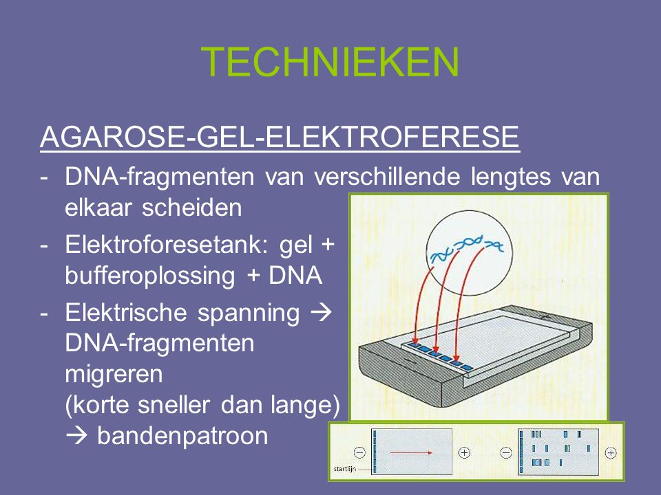 TECHNIEKEN AGAROSE-GEL-ELEKTROFERESE