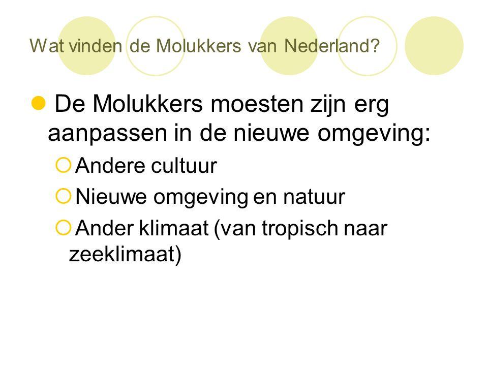 Wat vinden de Molukkers van Nederland