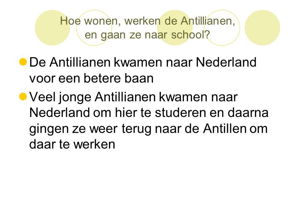 Hoe wonen, werken de Antillianen, en gaan ze naar school