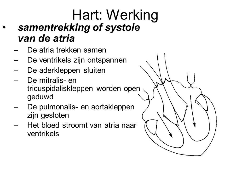 Hart: Werking samentrekking of systole van de atria