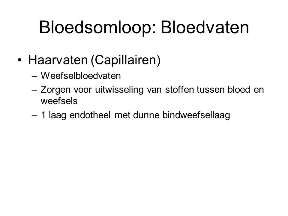 Bloedsomloop: Bloedvaten
