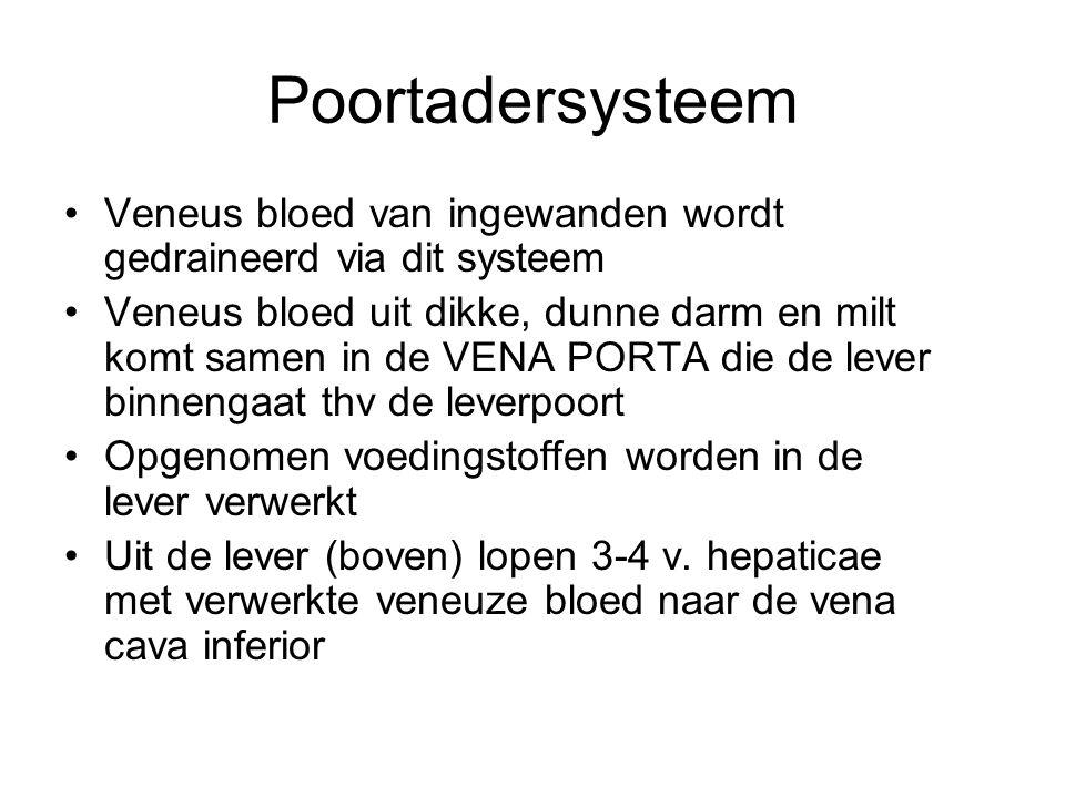 Poortadersysteem Veneus bloed van ingewanden wordt gedraineerd via dit systeem.