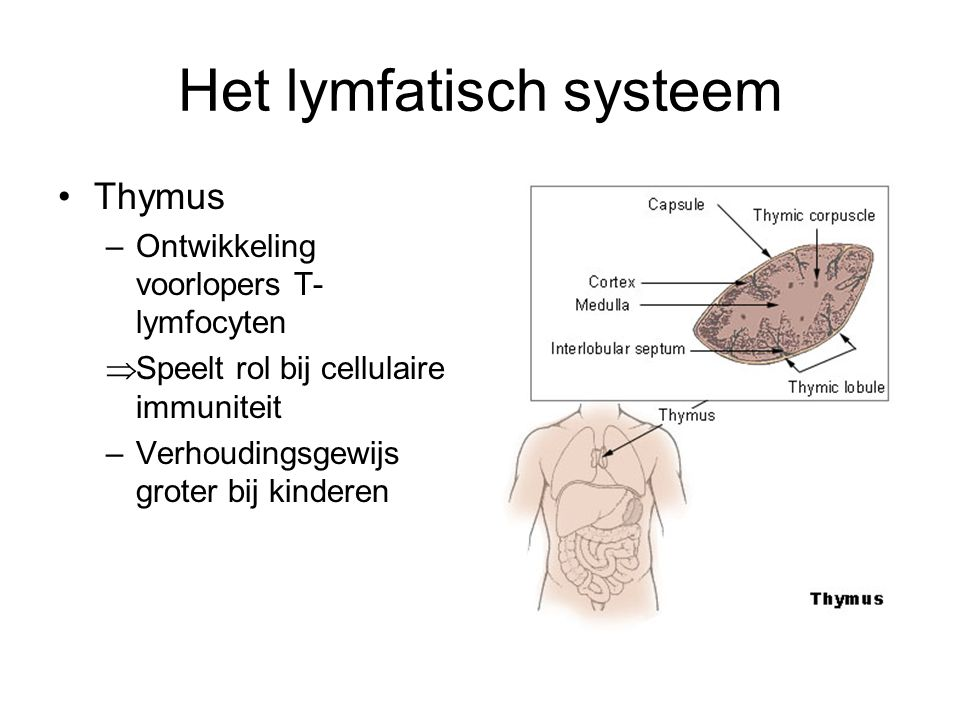 Het lymfatisch systeem