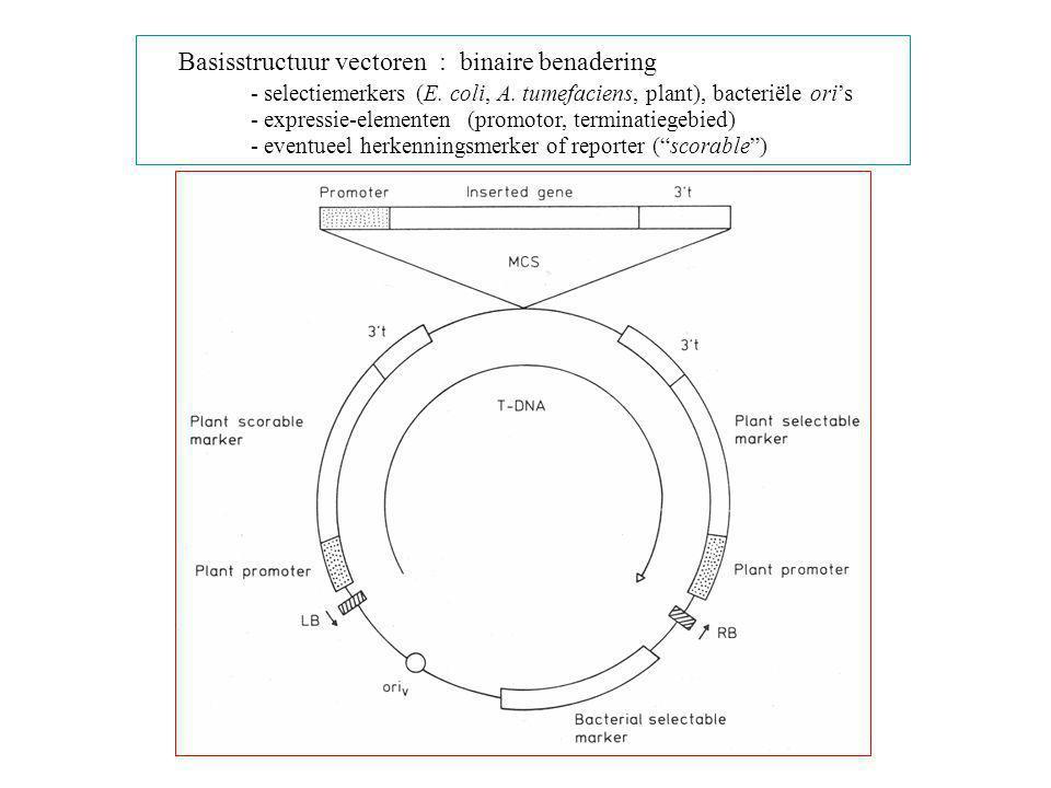 Basisstructuur vectoren : binaire benadering
