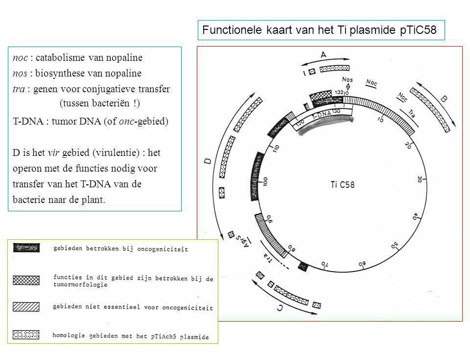 Functionele kaart van het Ti plasmide pTiC58