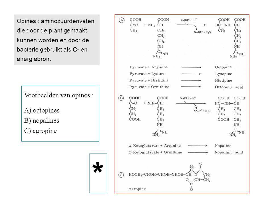 * Voorbeelden van opines : A) octopines B) nopalines C) agropine
