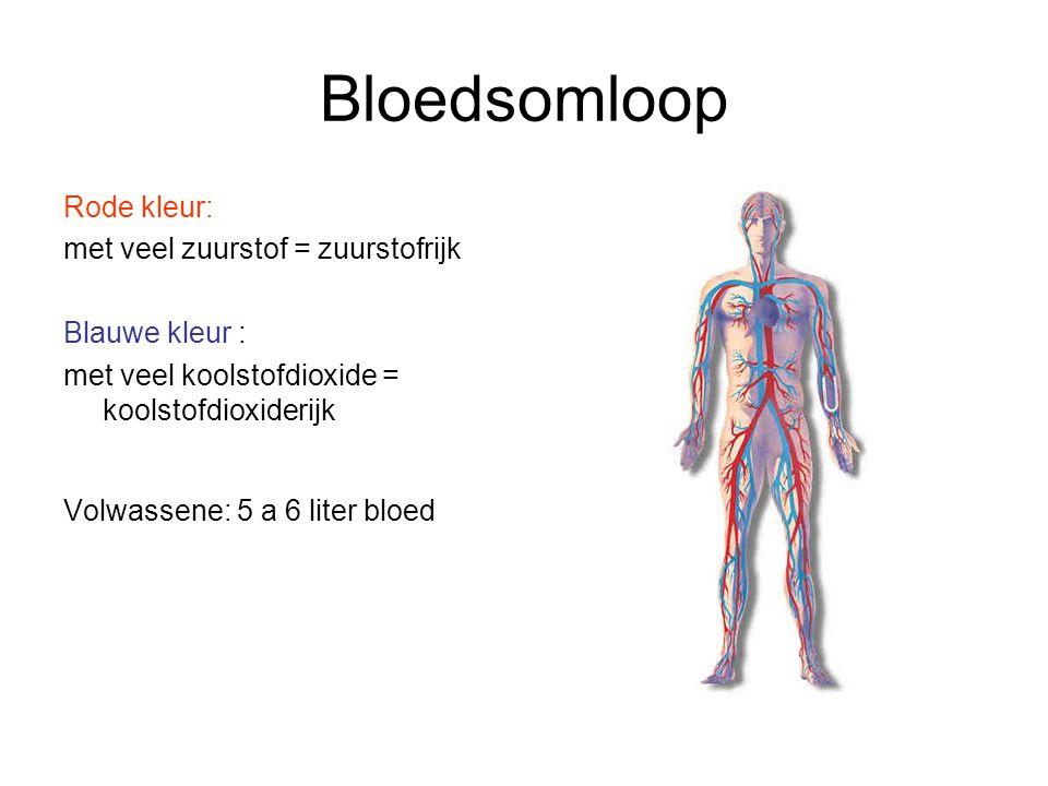 Bloedsomloop Rode kleur: met veel zuurstof = zuurstofrijk