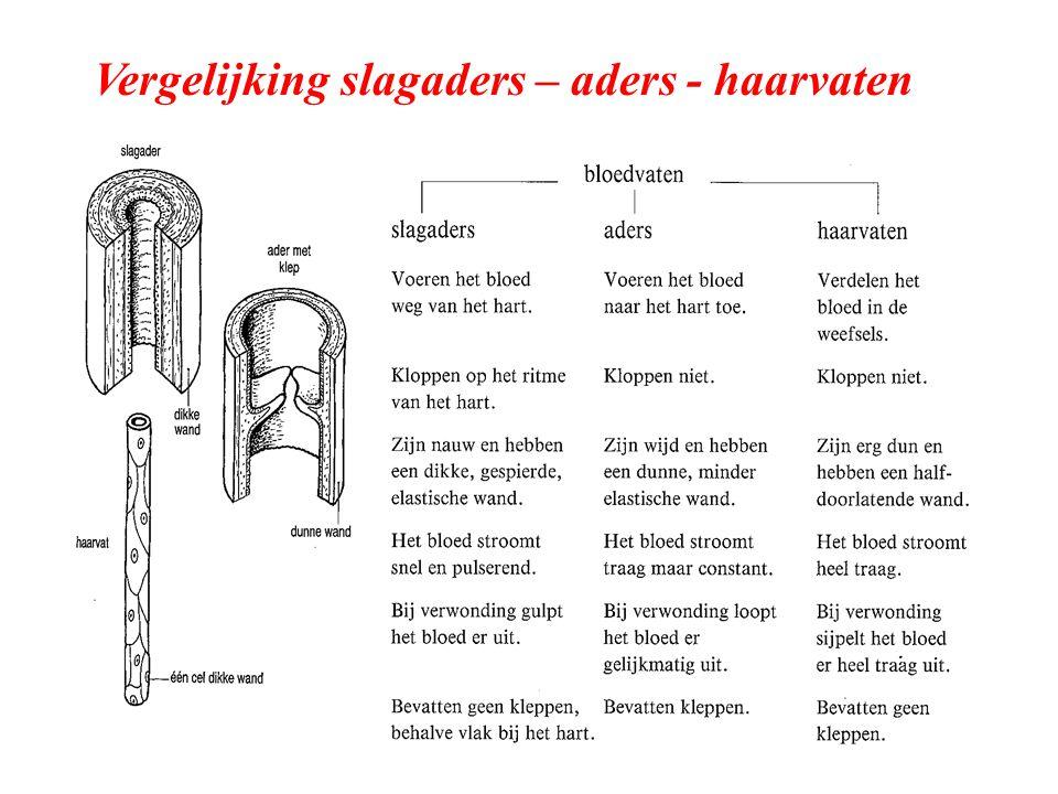 Vergelijking slagaders – aders - haarvaten