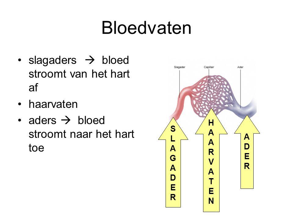 Bloedvaten slagaders  bloed stroomt van het hart af haarvaten