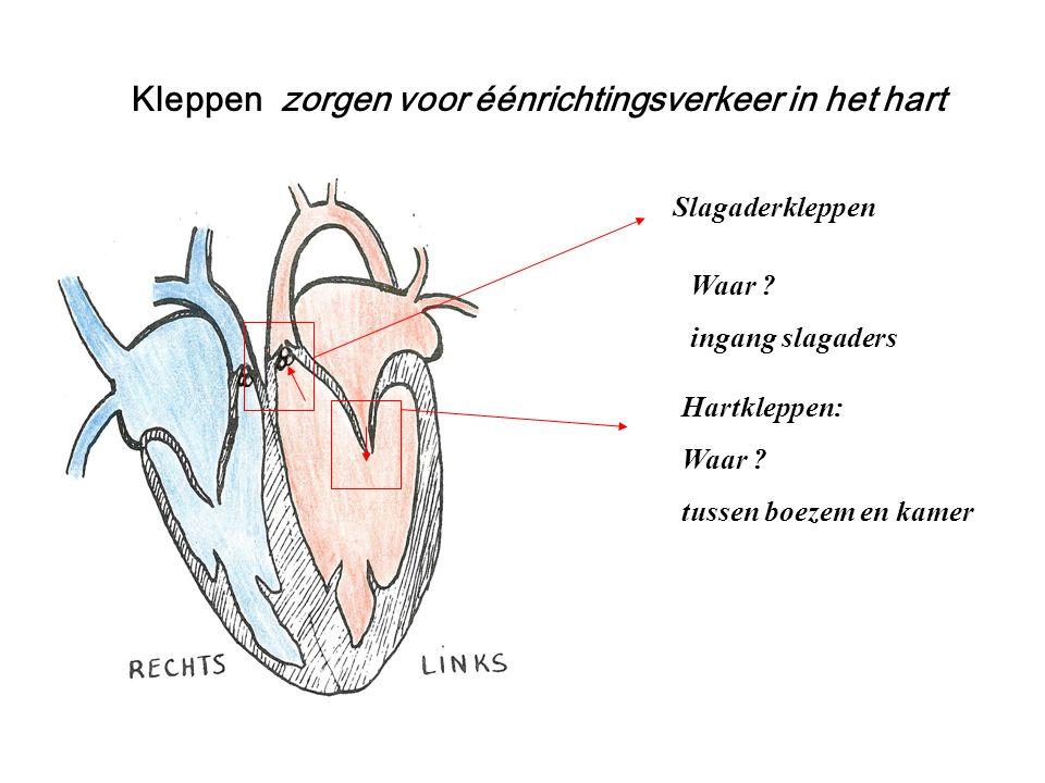 Kleppen zorgen voor éénrichtingsverkeer in het hart