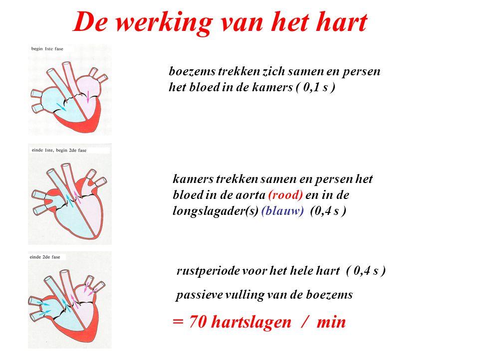 De werking van het hart = 70 hartslagen / min