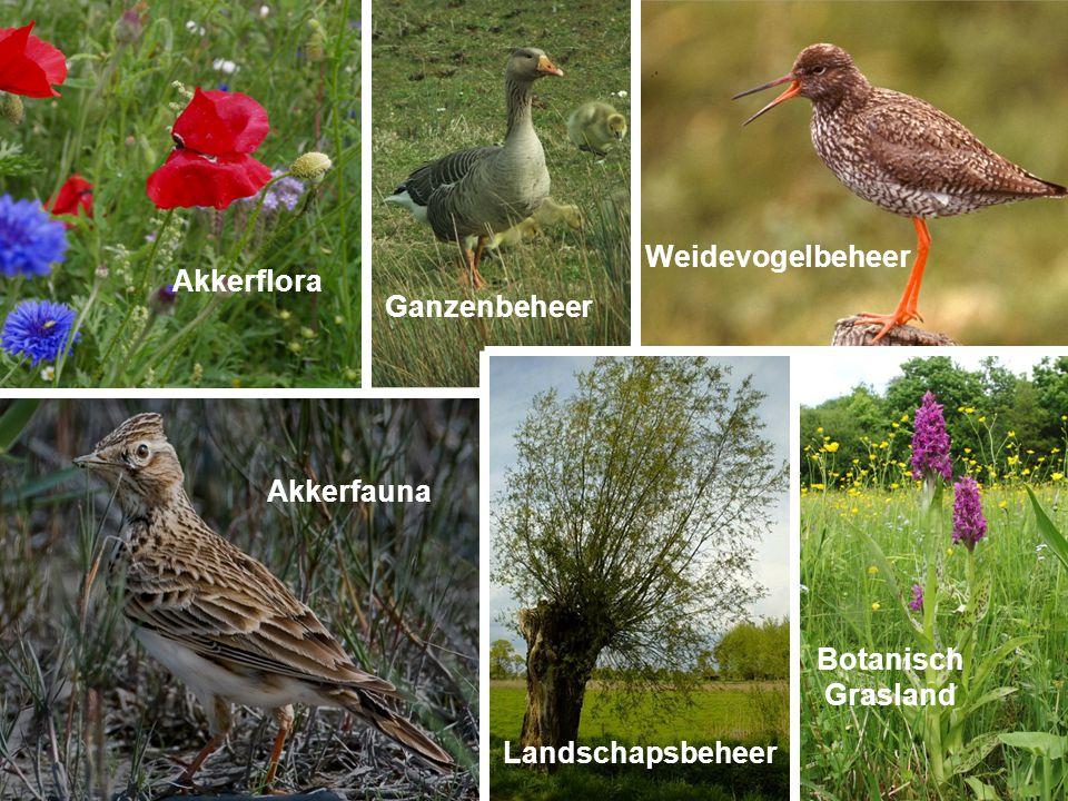 Akkerflora BotanischGrasland