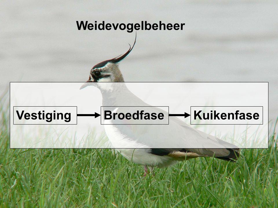 Weidevogelbeheer Broedfase Kuikenfase Vestiging 14