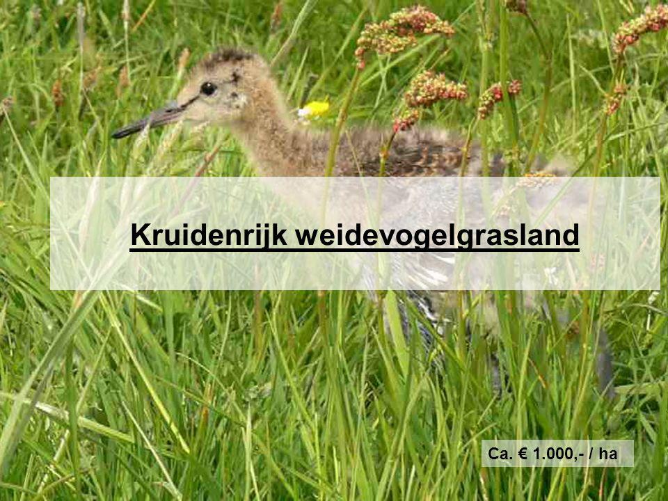 Kruidenrijk weidevogelgrasland