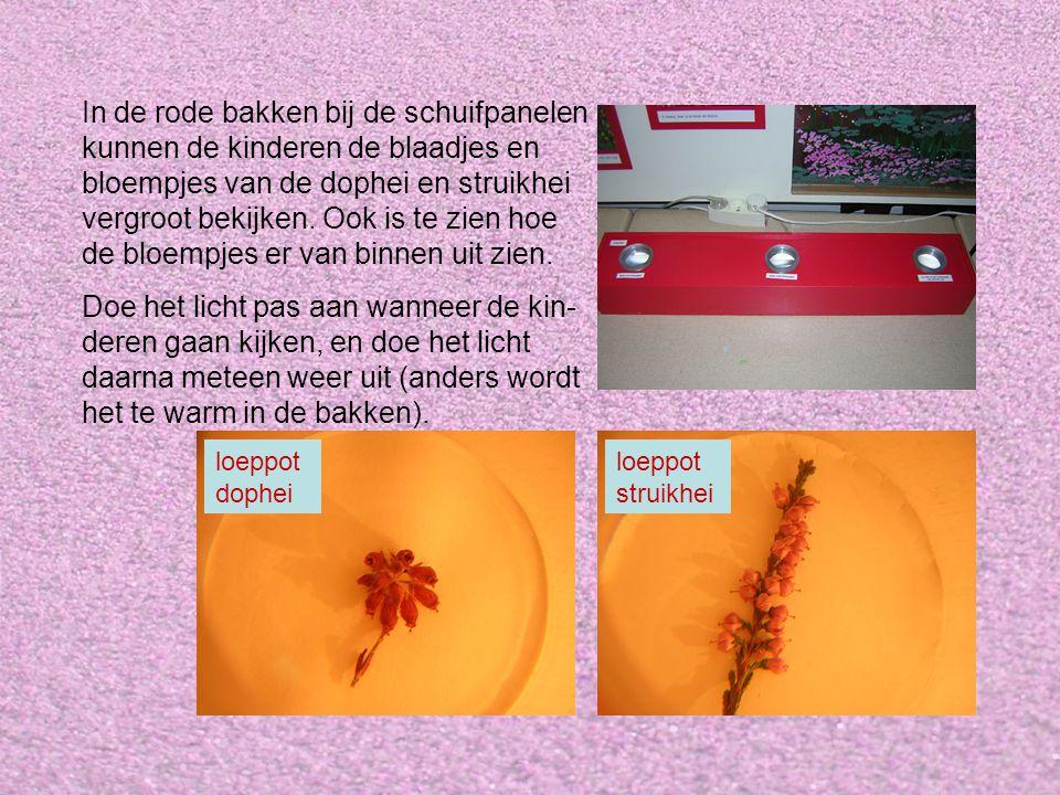 In de rode bakken bij de schuifpanelen kunnen de kinderen de blaadjes en bloempjes van de dophei en struikhei vergroot bekijken. Ook is te zien hoe de bloempjes er van binnen uit zien.