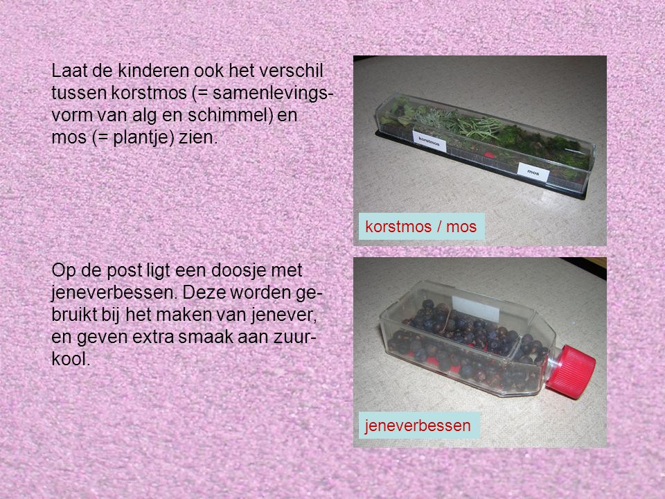 Laat de kinderen ook het verschil tussen korstmos (= samenlevings- vorm van alg en schimmel) en mos (= plantje) zien.