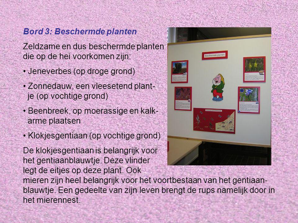 Bord 3: Beschermde planten