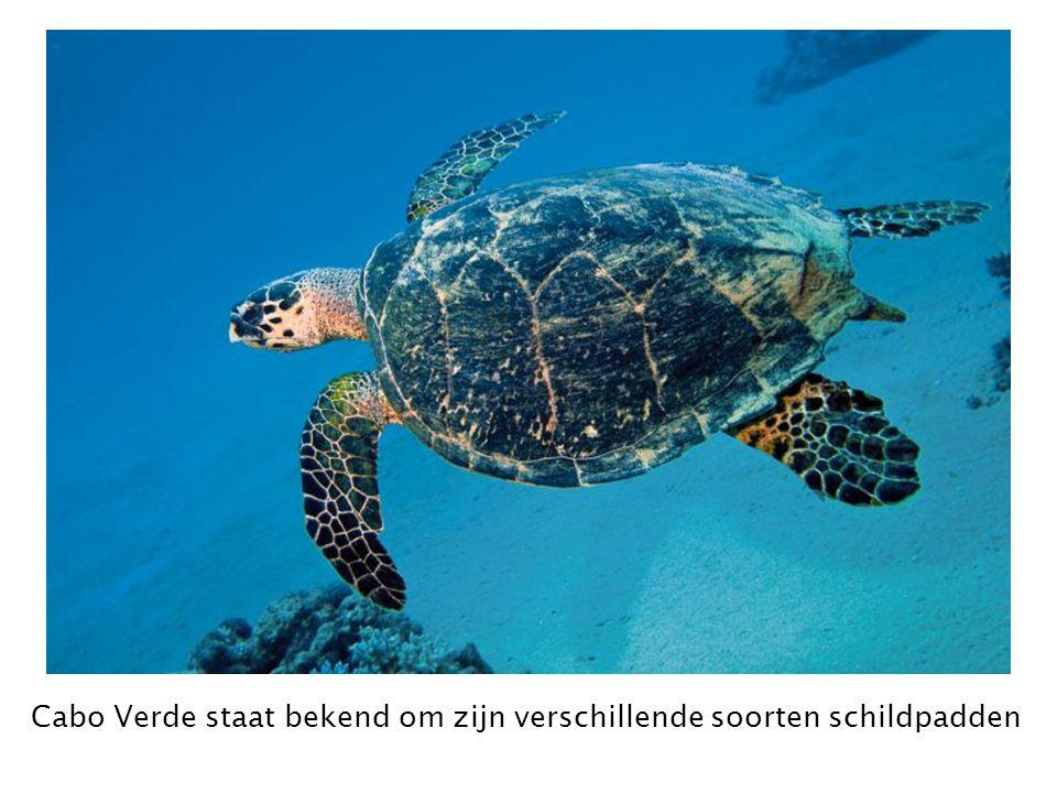 Cabo Verde staat bekend om zijn verschillende soorten schildpadden