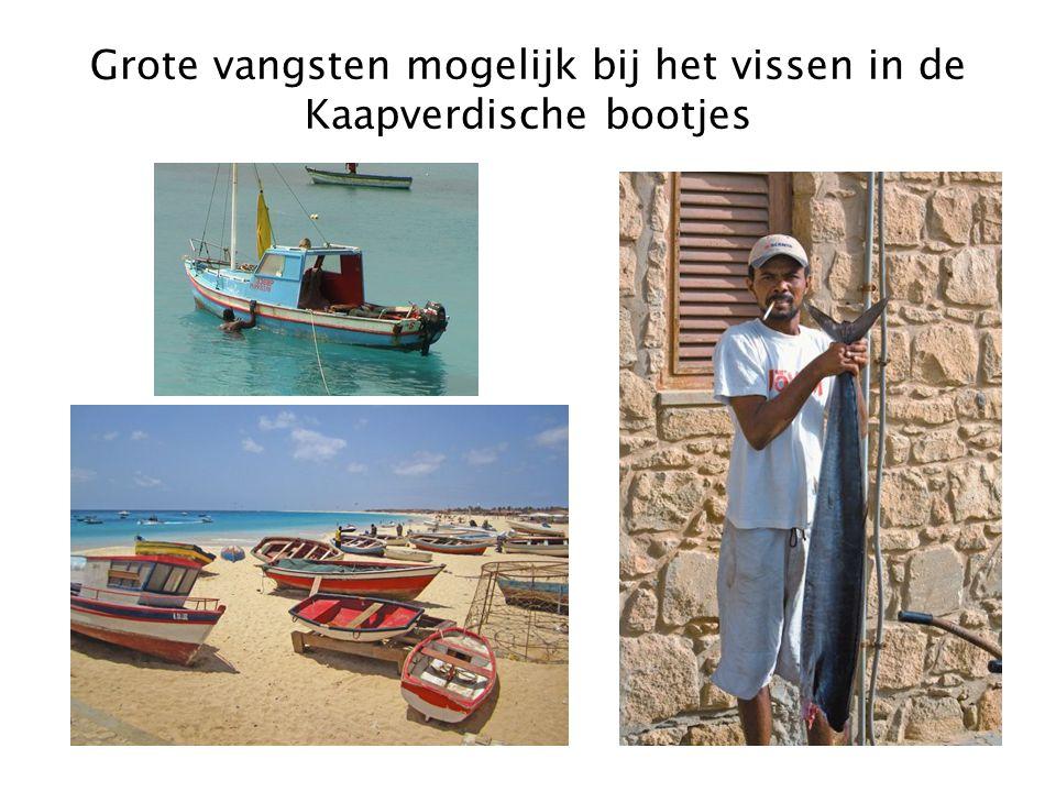 Grote vangsten mogelijk bij het vissen in de Kaapverdische bootjes