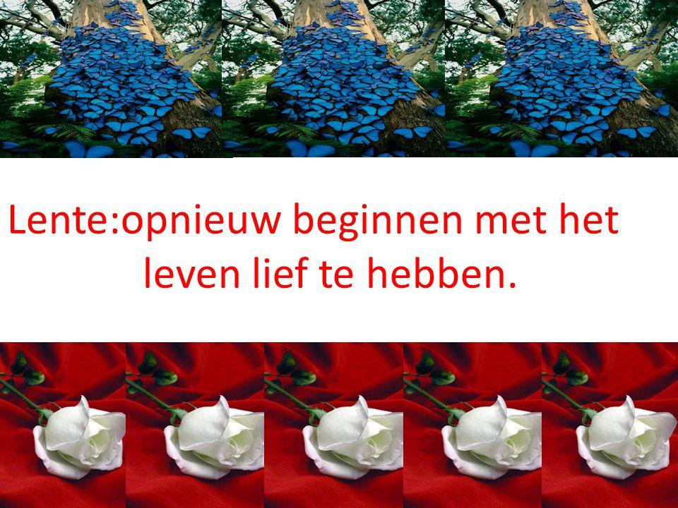 Lente:opnieuw beginnen met het leven lief te hebben.