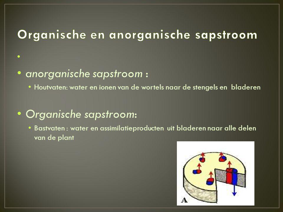 Organische en anorganische sapstroom