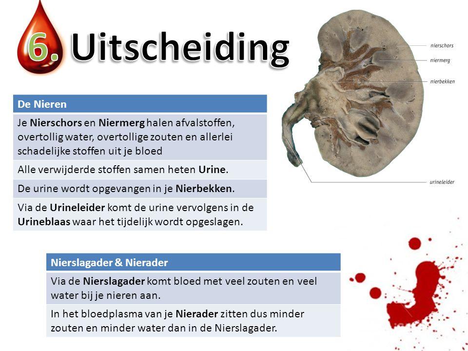 6. Uitscheiding De Nieren