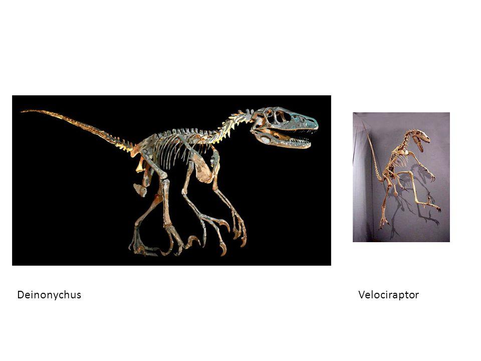 Deinonychus Velociraptor