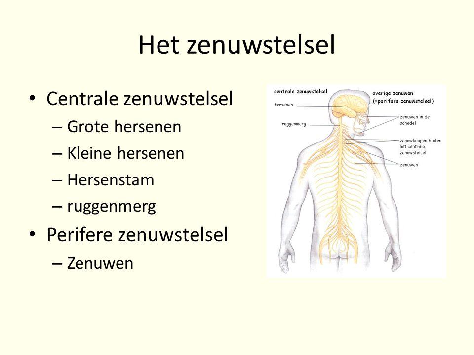 functie perifere zenuwstelsel