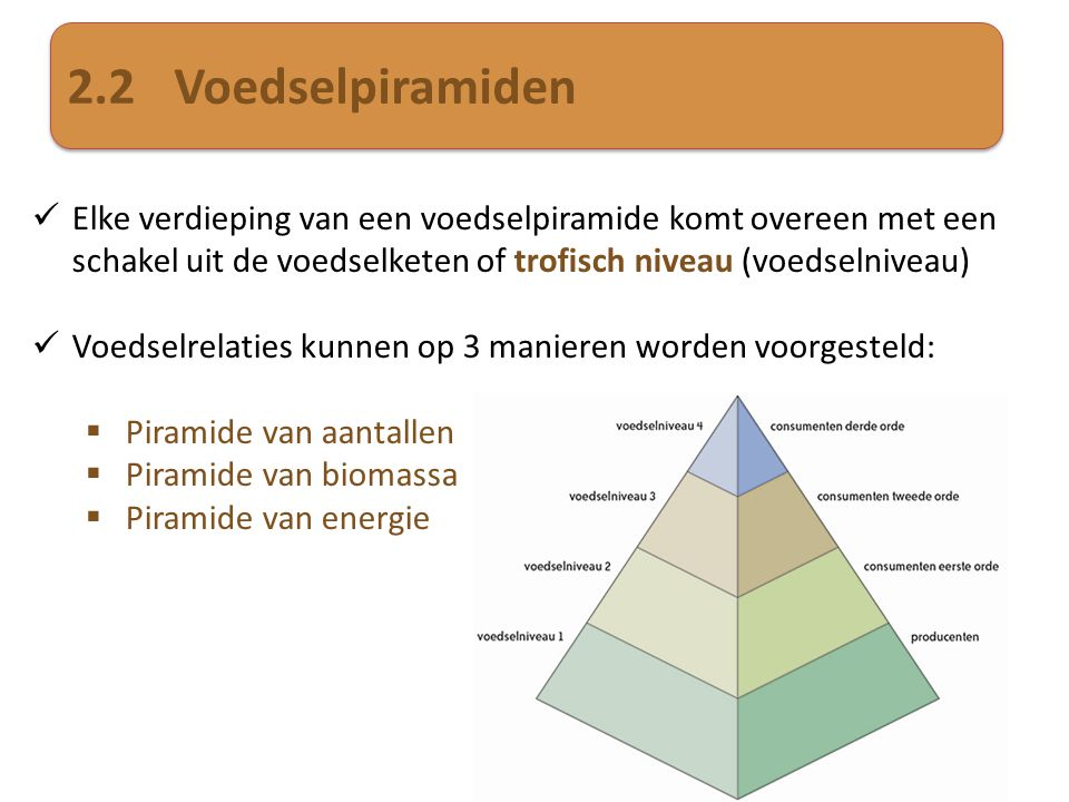 2.2 Voedselpiramiden Elke verdieping van een voedselpiramide komt overeen met een schakel uit de voedselketen of trofisch niveau (voedselniveau)