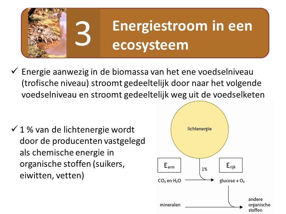 3 Energiestroom in een ecosysteem