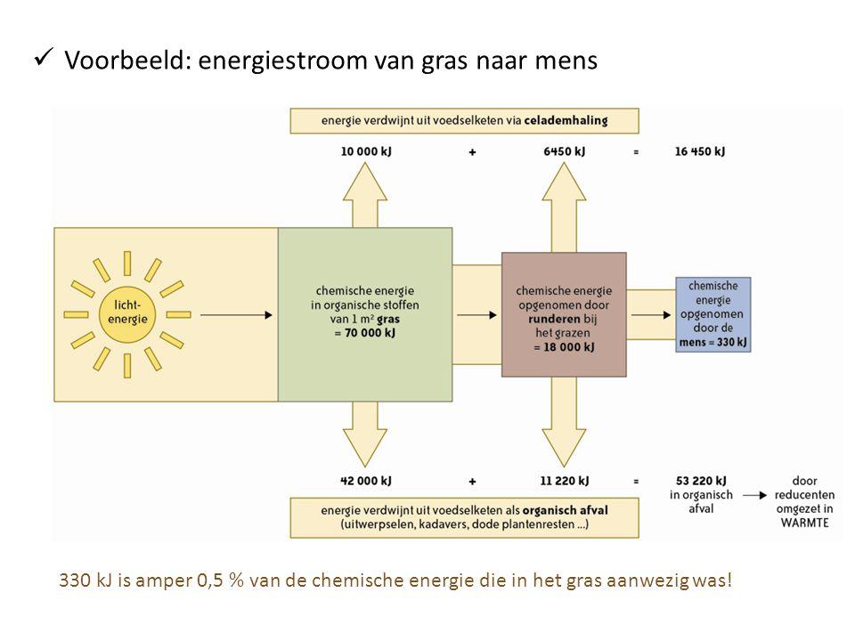 Voorbeeld: energiestroom van gras naar mens
