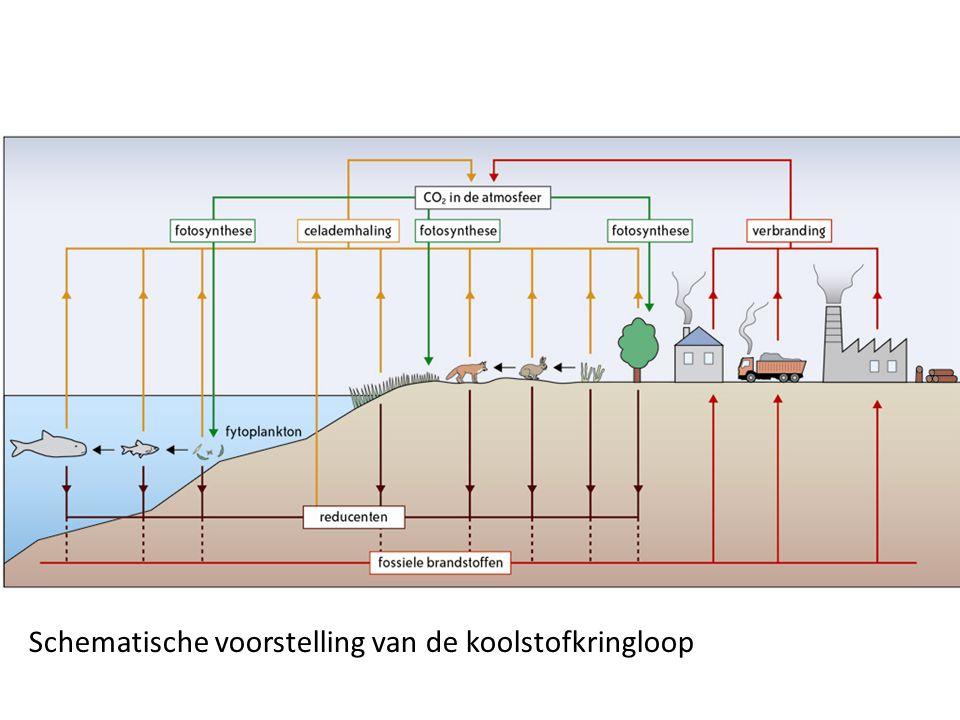 Schematische voorstelling van de koolstofkringloop