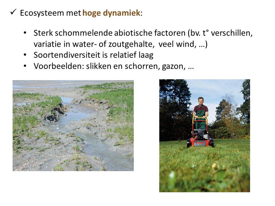 Ecosysteem met hoge dynamiek: