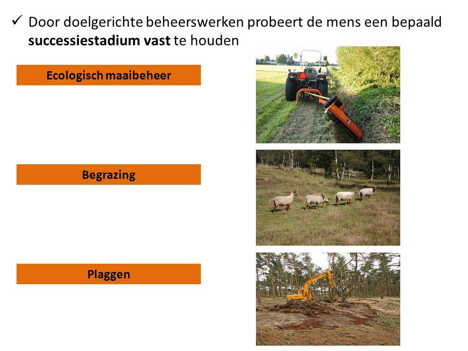Ecologisch maaibeheer