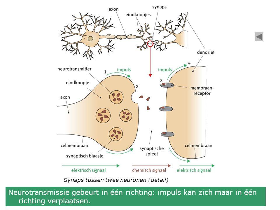 Synaps tussen twee neuronen (detail)