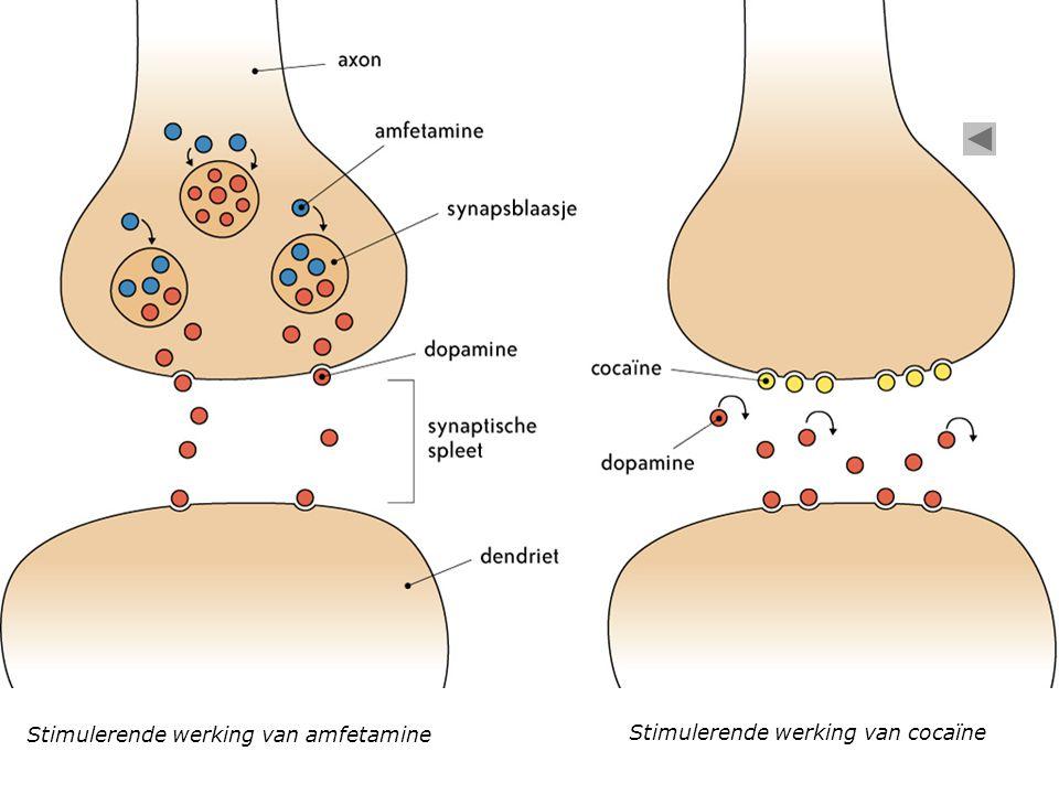 Stimulerende werking van amfetamine