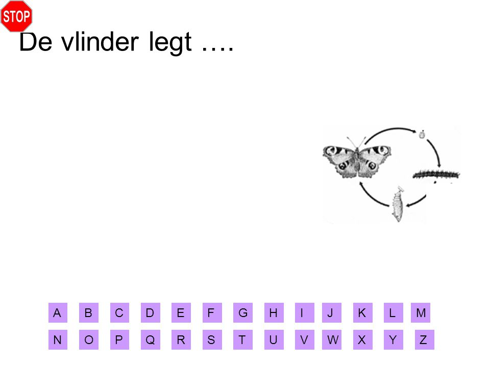 De vlinder legt …. A B C D E F G H I J K L M N O P Q R S T U V W X Y Z