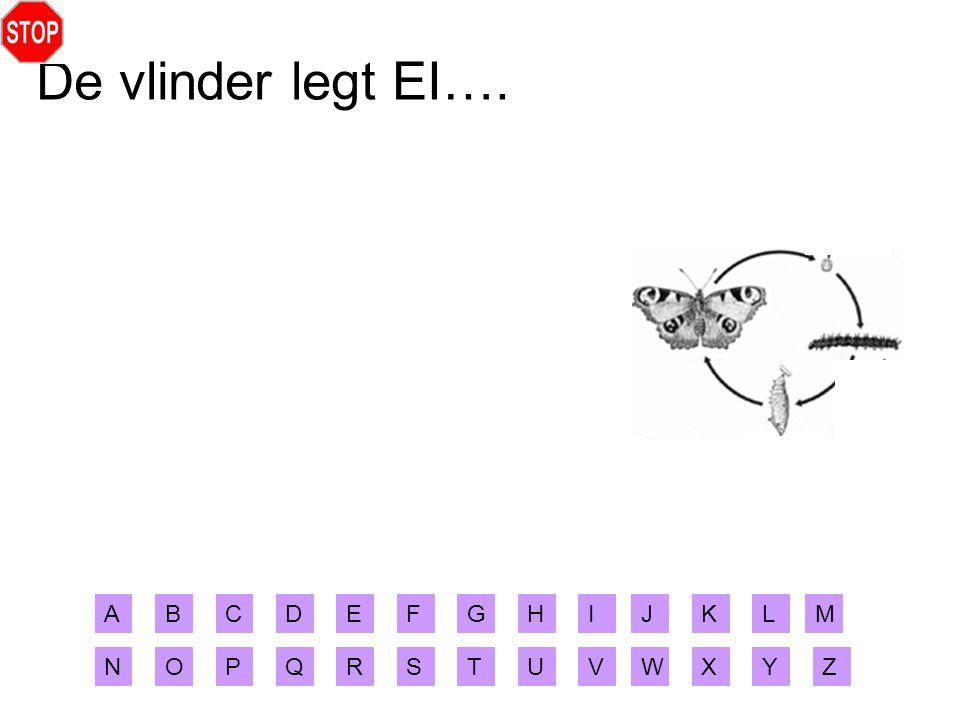 De vlinder legt EI…. A B C D E F G H I J K L M N O P Q R S T U V W X Y