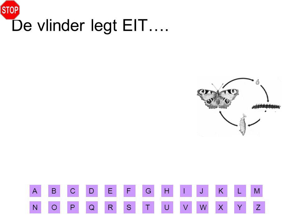 De vlinder legt EIT…. A B C D E F G H I J K L M N O P Q R S T U V W X