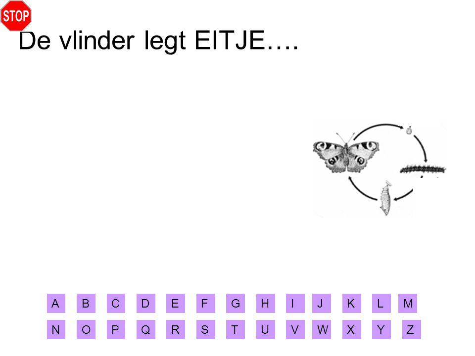 De vlinder legt EITJE…. A B C D E F G H I J K L M N O P Q R S T U V W