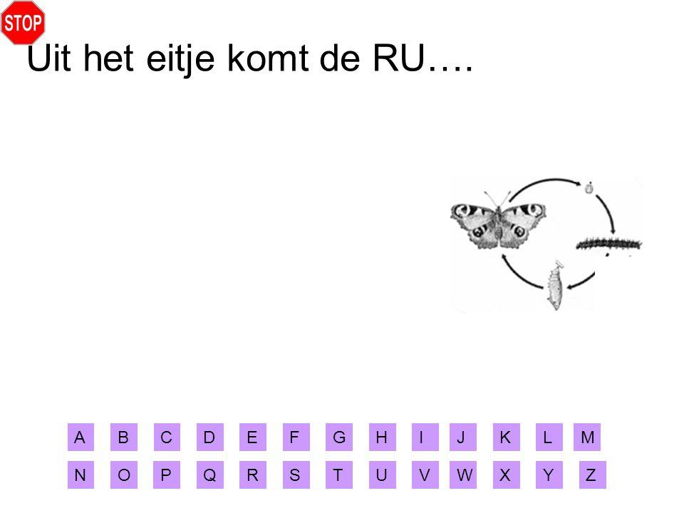 Uit het eitje komt de RU….