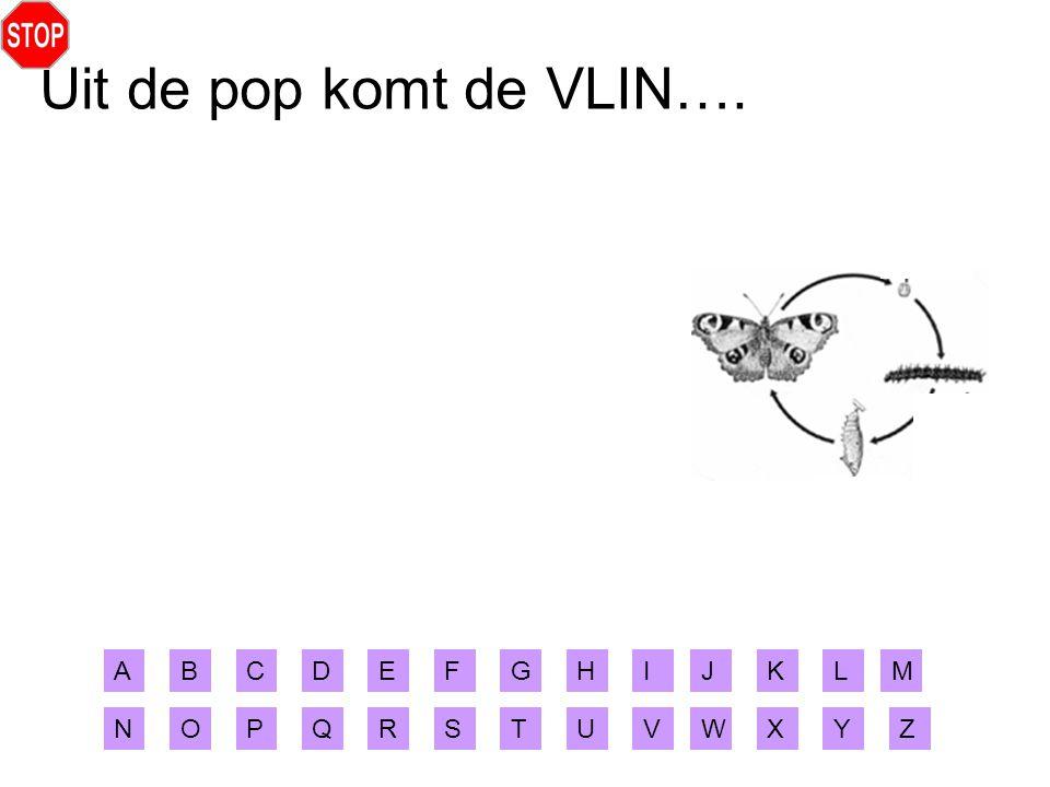 Uit de pop komt de VLIN…. A B C D E F G H I J K L M N O P Q R S T U V