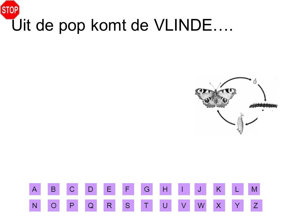 Uit de pop komt de VLINDE….