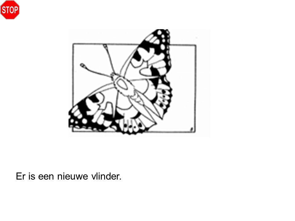 Er is een nieuwe vlinder.