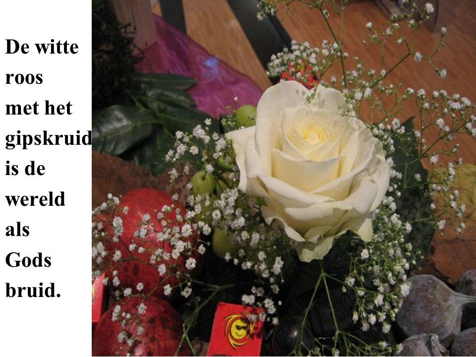 De witte roos met het gipskruid is de wereld als Gods bruid.